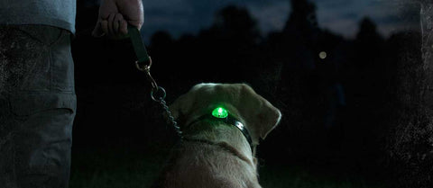 lumiere led sportdog beacon locator