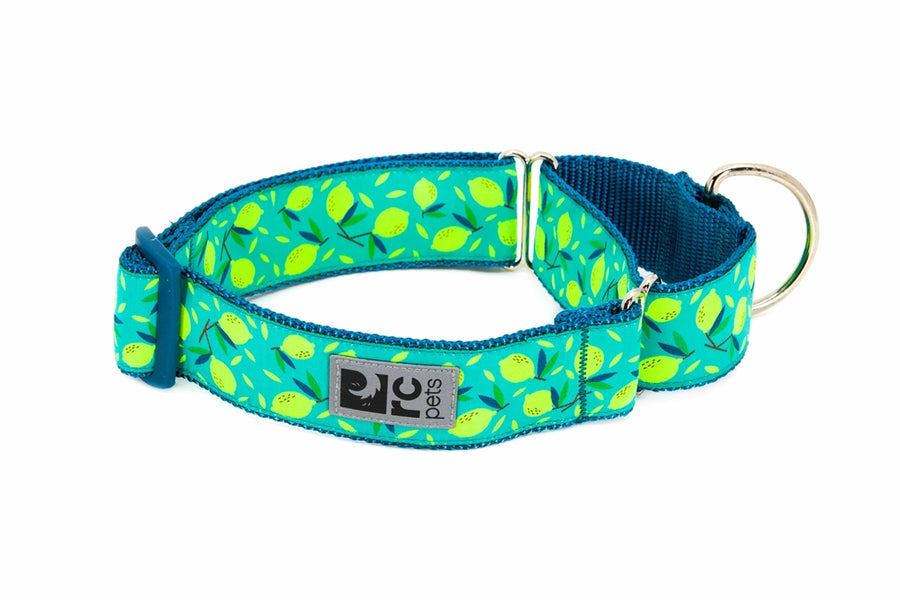 Collier martingale - RCpets Lemonade 1.5''