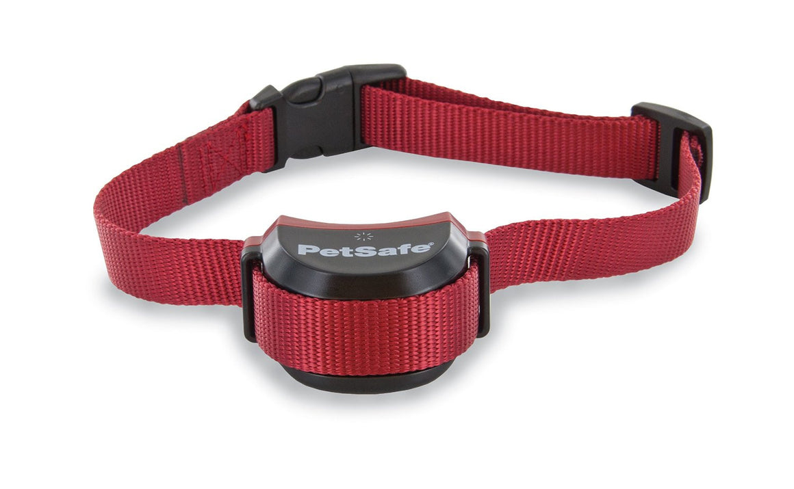 Collier stay and play pour chien têtu