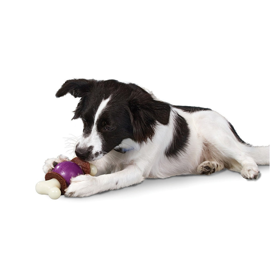 Jouet interactif Busy Buddy Bouncy Bone