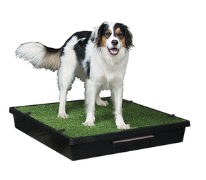 pet loo grand chien