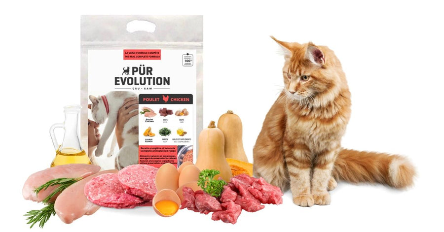 PÜR Evolution Chat - POULET - Cru congelé en magasin seulement