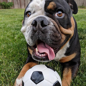 Ballon de soccer Planet Dog Orbee Tuff
