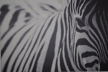 Load image into Gallery viewer, Eye of the Zebra