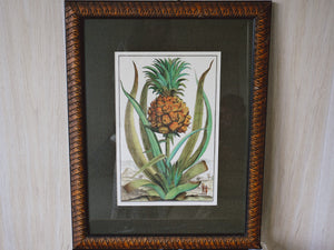 "Vintage Fine Art Print of Tropical Pineapple Print with Custom Made Frame | Pineapple, Tab III from ""Nurenberg Hesperides"" 