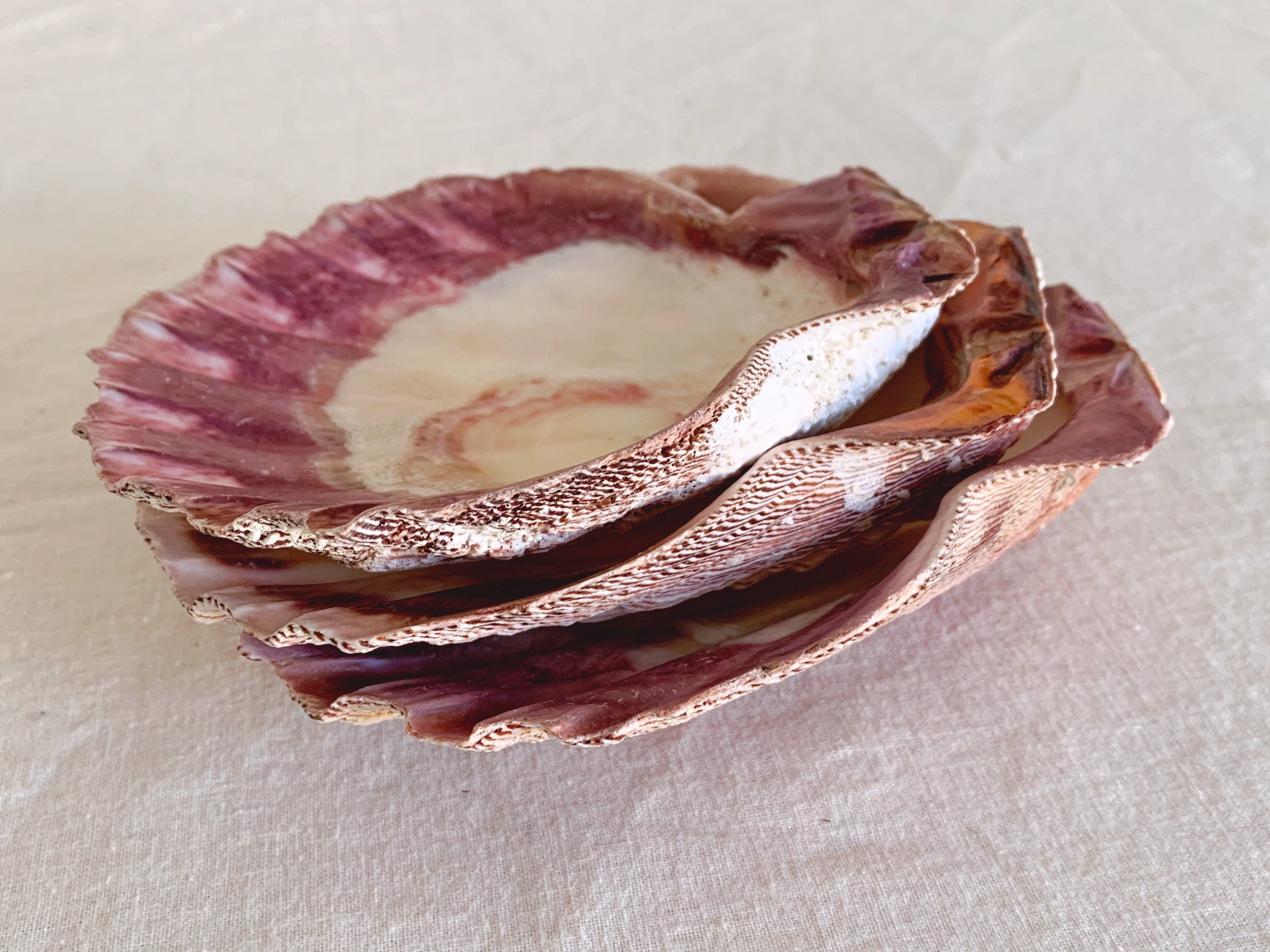 Large Real Lions Paw Shell Plates | Natural King Scallop Grilling Shells | Jewelry Dish