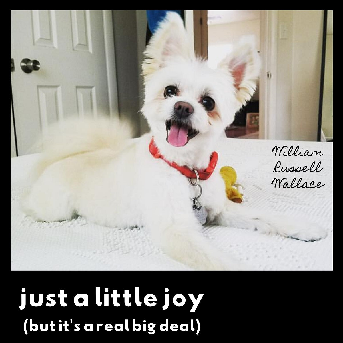 Review: William Russell Wallace – 'Just A Little Joy (But It's A Real Big Deal)'