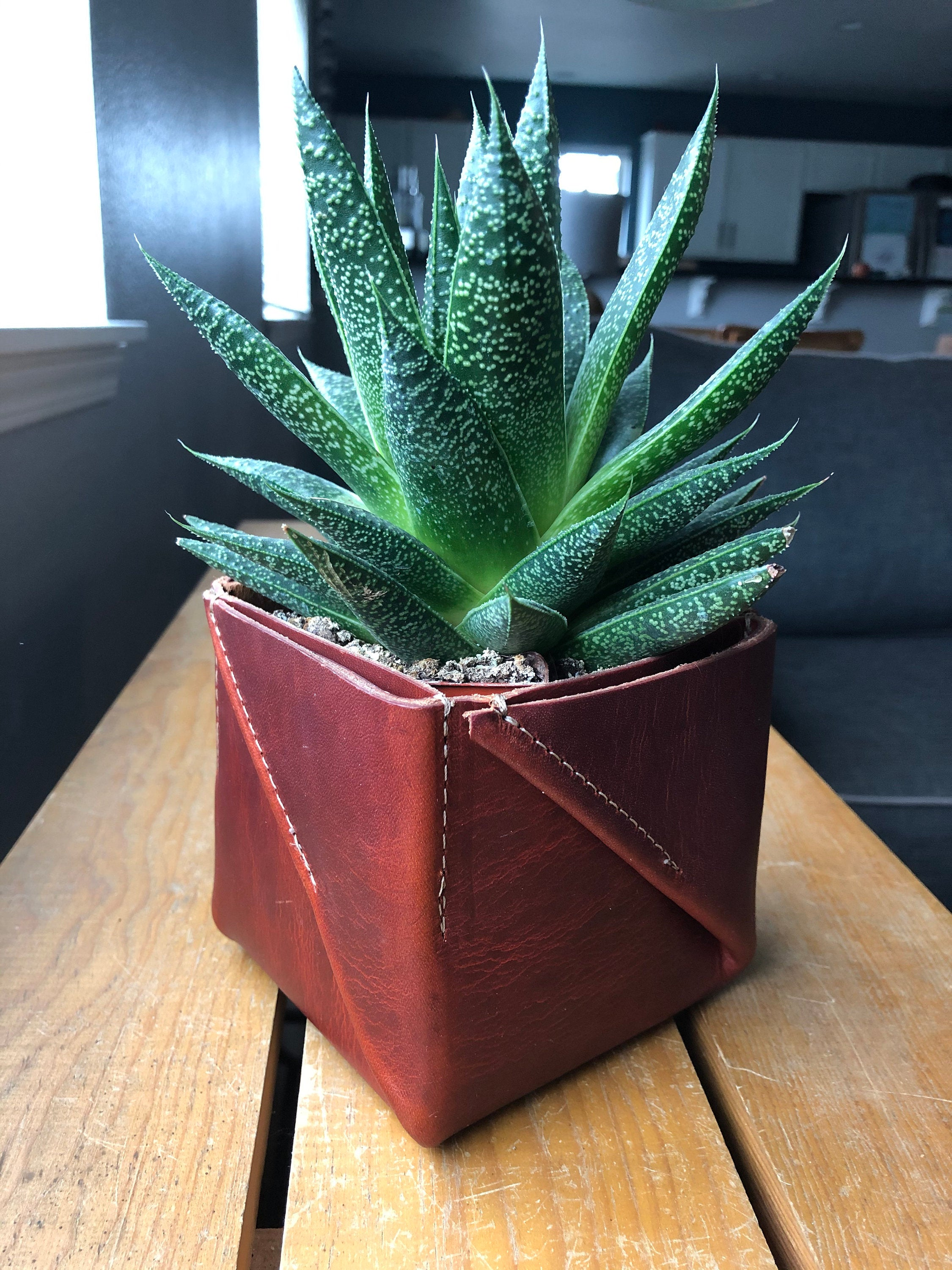 Brown, folded leather planter holds spiky green succulent on table by window