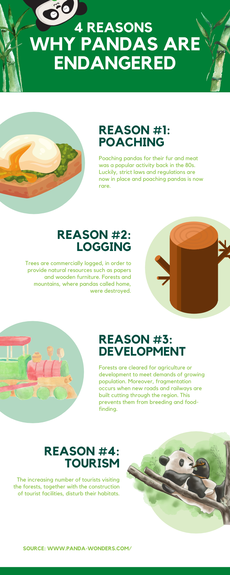 Reasons Why Pandas Are Endangered - Infographic