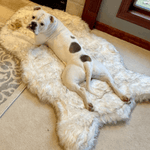 Orthopaedic Memory Foam Dog Mat