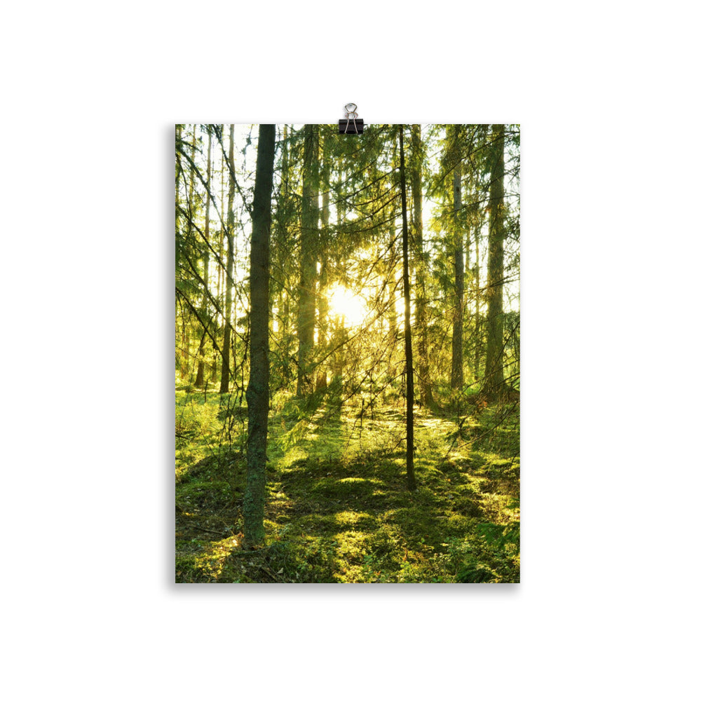 Swedish Forest Poster Photography