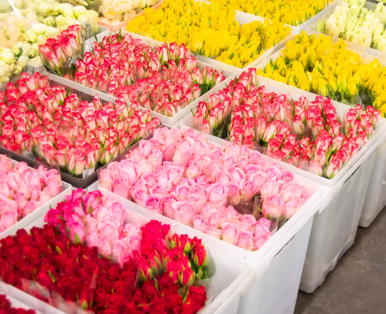 How To Choose A Preserved Flowers Wholesale Supplier