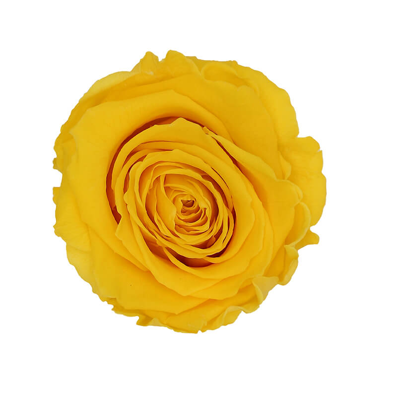 Warm Yellow Preserved Roses