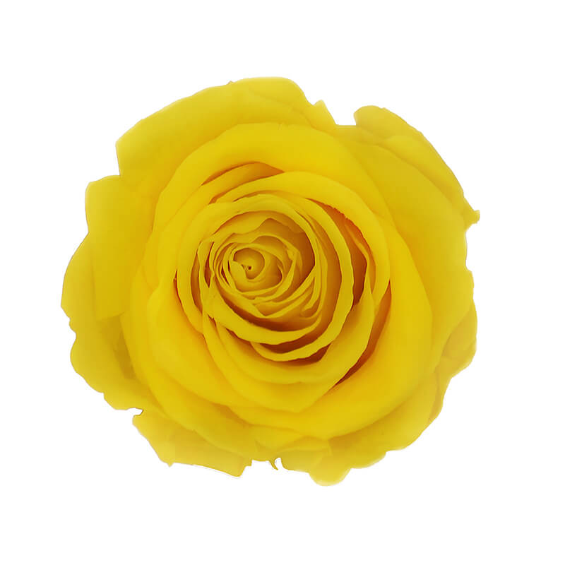 Bright Yellow Preserved Roses