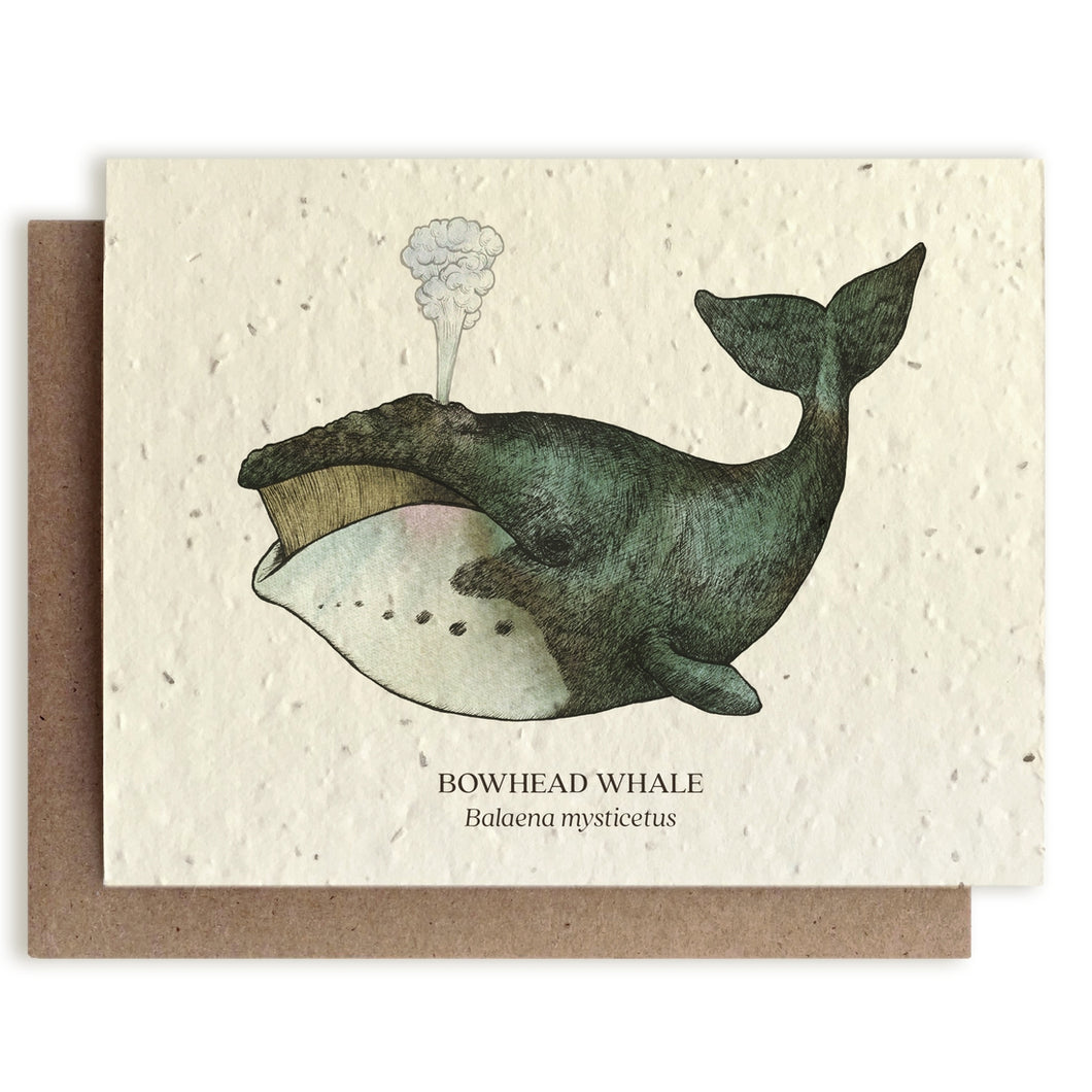 Plantable Seed Cards - Whale Blank Card