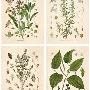 Vintage Reproduction Print - Botanical Herbs (set of 4)