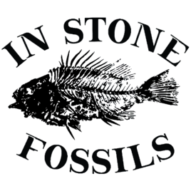 Fossils For Sale | In Stone Fossils