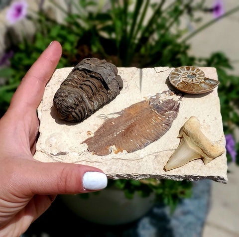 Fossil Collection Bundle Authentic Fossils For Beginners Or Students STEM Gift