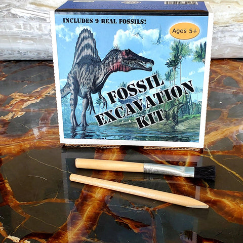 Dig Out Your Own Fossils Fossil Excavation Kit For Kids 9 Real Fossils