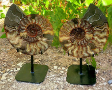 Load image into Gallery viewer, Split Ammonite Pair with Custom Metal Display
