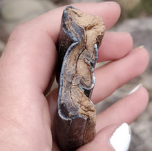 Load image into Gallery viewer, *Rare* South American Toxodon Tooth