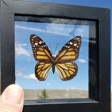 Load image into Gallery viewer, Monarch Butterfly