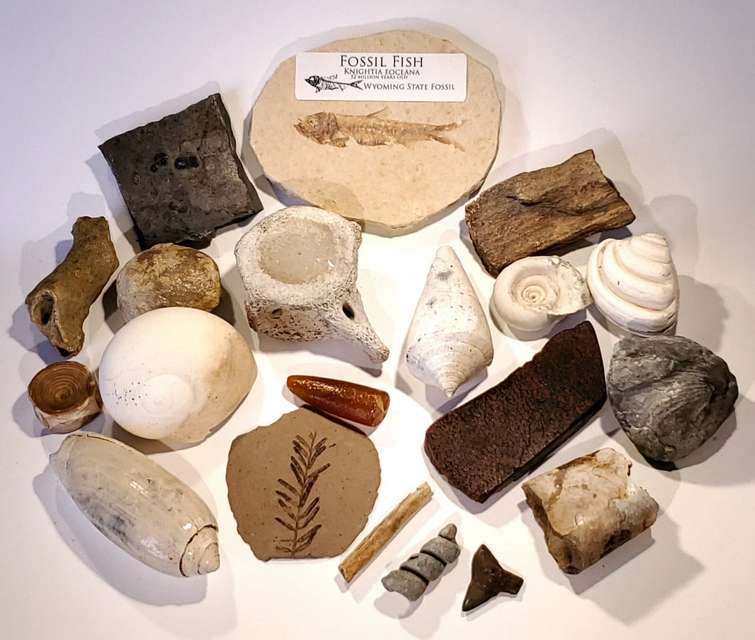 Fossils of North America Collection