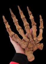 Load image into Gallery viewer, Siberian Cave Bear Paw
