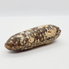 Load image into Gallery viewer, Equicalastrobus Petrified Pine Cone