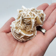 Load image into Gallery viewer, Desert Rose Gypsum Cluster