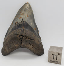 "Load image into Gallery viewer, 5.25"" Megalodon Tooth"