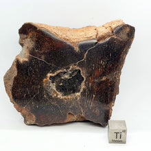 Load image into Gallery viewer, Camarasaur Vertebre Gem Bone with Smokey Quartz
