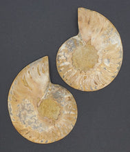Load image into Gallery viewer, Ammonite Pair 3""