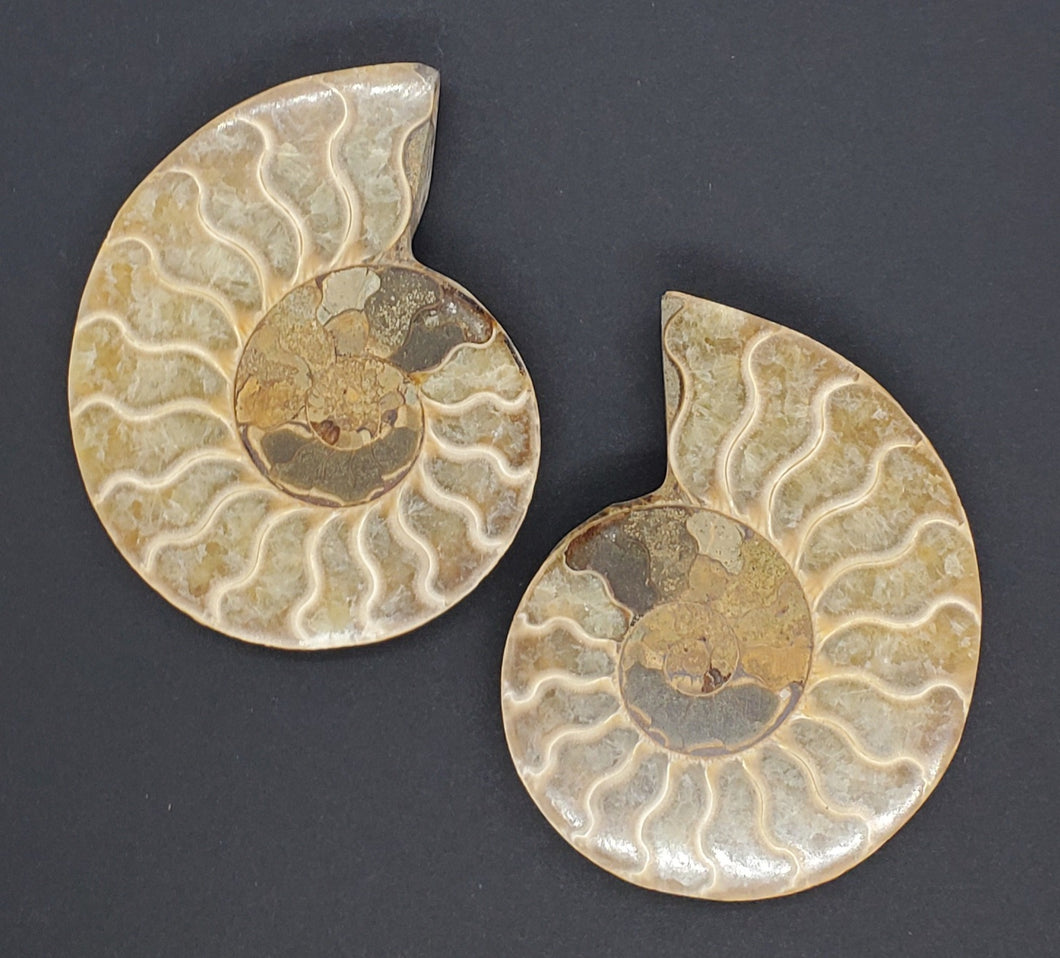 Ammonite Pair 3