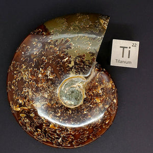 Whole Madagascan Ammonite