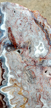 Load image into Gallery viewer, Crazy Lace Agate Polished Slab | Mexico