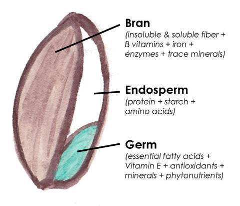 Whole Grain Bran Endosperm Germ