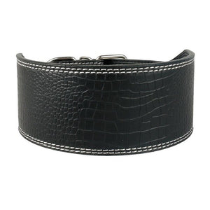 "Thick 3"" greyhound collar"