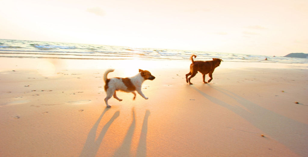 Dogs on the beach in the UK