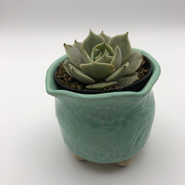 Mini Succulent Planter - Aqua