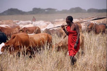 Load image into Gallery viewer, Tanzanian cattle farmer photo credit Manyara Ranch Conservancy