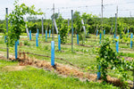Overland Park's First Winery