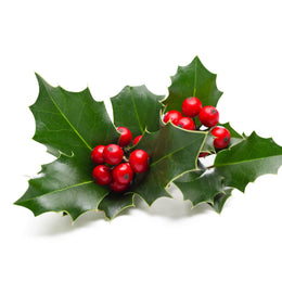 Bouquet of Holly.