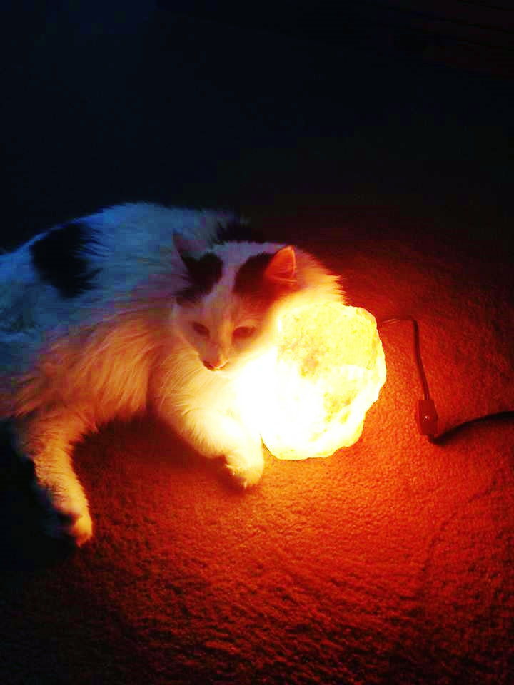 Salt lamps and cats, all animals enjoy the benefits of salt lamps.