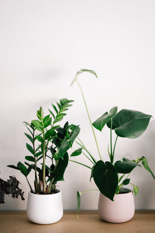Houseplants suffer from low levels of humidity.