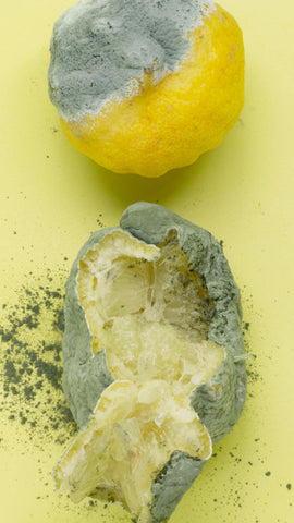 The difference in appearance between mold and mildew.