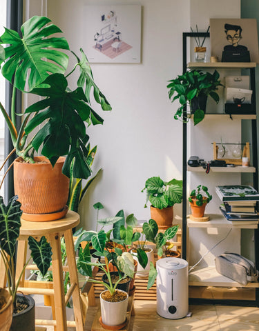 You can use commercial alternatives to water your plants while away.