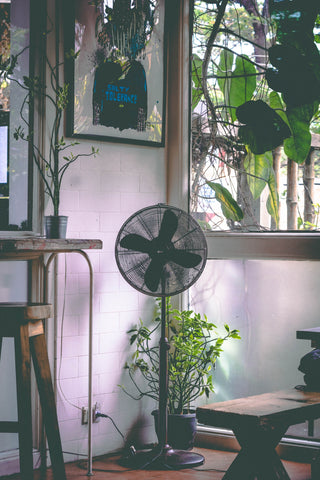 There are ample benefits to managing humidity levels during the summer months.