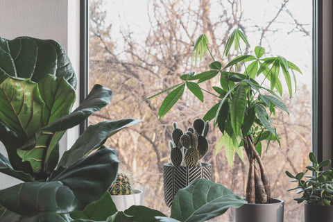 Group plants for optimal humidity and plant health.