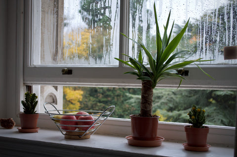 Open a window to regulate humidity levels.